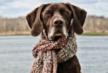 Dogs / by Debra Henry
