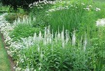 White Garden / by B Barlup