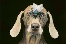 Animals / Fine art photographs of Animals - All the details of the images can be found on http://www.all-about-photo.com/