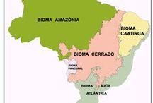 Meu Brasil !!! / Tudo do meu Brasil.