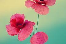 flor / flor