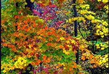 Az Ősz száz pillanata, gyönyörű színekben,és képekben:))
