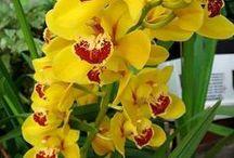 Szép virágok:)