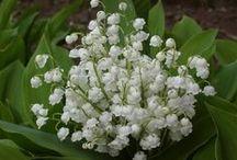 Szép tavaszi virágok:)