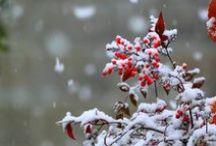 Téli képek,és tájak:)