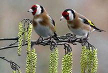 SZÉP madarak:)
