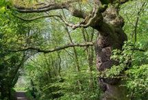 All about ancient woodland / Havens of great complexity, ancient woods are often some of the richest habitats for plants, fungi and wildlife, as well as being an open book to our past. These woods are a delight to visit. They are places of beauty and tranquillity. / by Woodland Trust