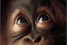 動物 / 可愛い、珍しい、好きな、小さい