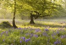 Some of our favourite woods! / The Woodland Trust manages over 1000 woods around the UK which are all free to visit - here are just a few of our favourites. / by Woodland Trust