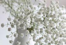 ▶ Taufe/Konfirmation/Hochzeit