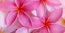 shades of pink / The pink color and its nuances, are assolutament my favorite shades