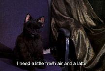 Salem is my spirit animal