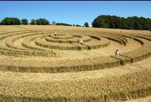 Crop Circles / aliens