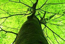 Trees beautiful ♡♡♡♡ / Se mi desti t'ascolto, e ogni pausa è cielo in cui mi perdo, serenità d'alberi a chiaro della notte