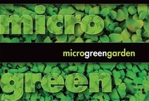 MicroGreen Garden / By Mark M. Braunstein. Microgreens—the young seedlings of herbs, vegetables, beans, seeds, and grains—contain four to six times the vitamins and phytochemicals found in mature leaves of the same plants.