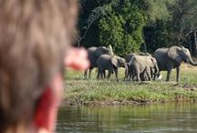 Lowis & Leakey | Zambia / Zambia is becoming more popular as a safari destination but it still feels like it is off the beaten track.