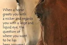 Horses / Every thing close and true to my heart.