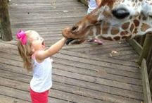 Humor IT! / The Funny Board   Hilarious Jokes   Make You Laugh   Make Someone Else Smile   Share The Humor   Cartoons   Visual Gags   Photos of Babies   Animals Making Funny Faces AND so much more ....