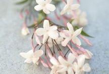 Pour l'amour des Fleurs / De jolies fleurs rien que pour le plaisir des yeux