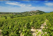 Loire Valley wine Tours / Wine tours are our speciality ; we live in the middle of the beautiful vineyards of the Loire Valley and we know a lot about this domain. So we wanted to give you an overview of the exceptional bespoke tours we can design for you.