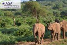 Auswilderungsstation der Elefantenwaisen im Tsavo East Nationalpark / Die geretteten Elefantenwaisen des DSWT bleiben im Elefantenwaisenhaus in Nairobi, bis sie ungefähr 2-3 Jahre alt sind und werden anschließend in den Tsavo East Nationalpark und die dortigen Auswilderungsstationen Voi und Ithumba umgesiedelt. Hier erlernen sie durch Hilfe der älteren, bereits ausgewilderten Elefanten nach und nach das Leben in freier Wildbahn kennen.  www.aga-artenschutz.de/elefantenwaisen.html
