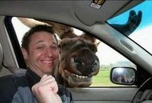 Animal Selfies and Photobombs / Animals have a sense of humour too and don't like being left out!