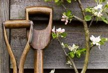 Gardening / Love everything that has to do with a garden / by Gisela