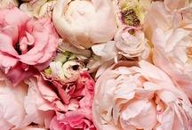 Pretty Pink / by Liz Chun