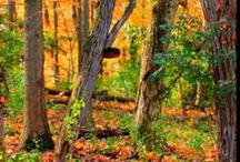 Northern Kentucky Nature Walks / The NKY and Cincy area boast a wealth of beautiful parks and greenspace.