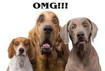 LA Love & Leashes Animal Rescue / Animal rescue! #adopt / by L.A. Love & Leashes
