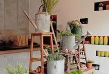 Indoor Grün