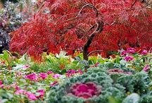 Yard stuff n plants n flowers / by Christi Bulluck