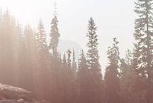 Wilderness / by Lila Lennon