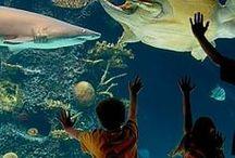 Newport Aquarium / The Newport Aquarium - rated the number one aquarium in the U. S.