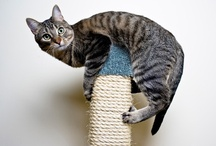 """Kitty-Cat Chronicles / A """"cat""""-alog of cat health information, feline photos, feline news and articles, feline videos...all things pertaining to our furry feline friends. / by OLIVIA"""