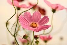 Floral favourites