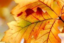 Seasons change - Autumn / Autumn - Autumn - Autumns