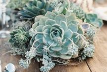 Romantic Coastal Weddings / It is so easy to become inspired by Romantic Coastal Weddings. I love living by the ocean with all its charm and character. If you are planning a beach wedding, enjoy this board.  / by VG Invites 🌺  - Inspiration For Your Big and Small Events