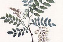 -Tavole botaniche-