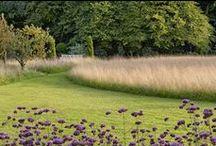 gardens - grass