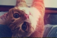 Cat-stravaganza / Funny cats, cute cats, downright awesome cats. We've got all your cat needs right here!