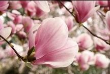 Sensational wedding flowers / add a pop pf colour to your spring wedding