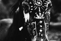 Horse / horse, atlar