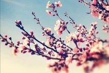 Flores  **  Flowers