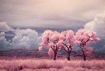 Landscape repins