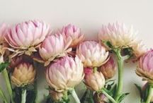 ::: Flowers :::