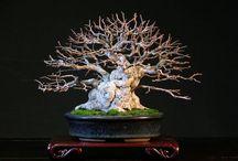 bonsai, керамика / kusamono, bonsai, ikebana