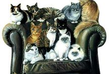 Arτ Cats