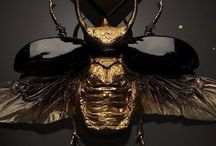 Bee ❈