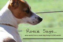 Rosie Says...Small Dog, BIG Wisdom! / Wisdom from the world of Rosie